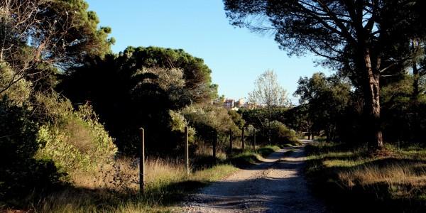 Chemin de Compostelle Puget sur Argens